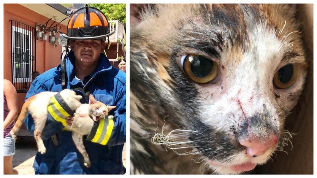 Animales afectados incendio Guanaja